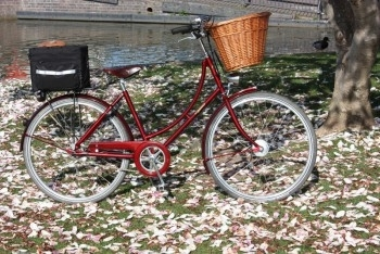 Dawn's Pashley in Blossom