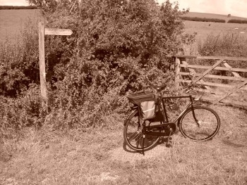 PASHLEY IN SEPIA